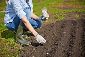 mantenimiento de jardines madrid abono