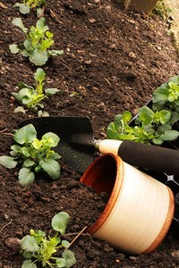 mantenimiento de jardines madrid poda